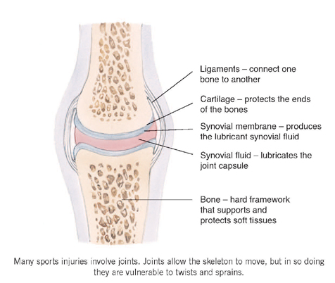The Different Types of Joint Injuries | Gordon Webb Chiropractic Blog
